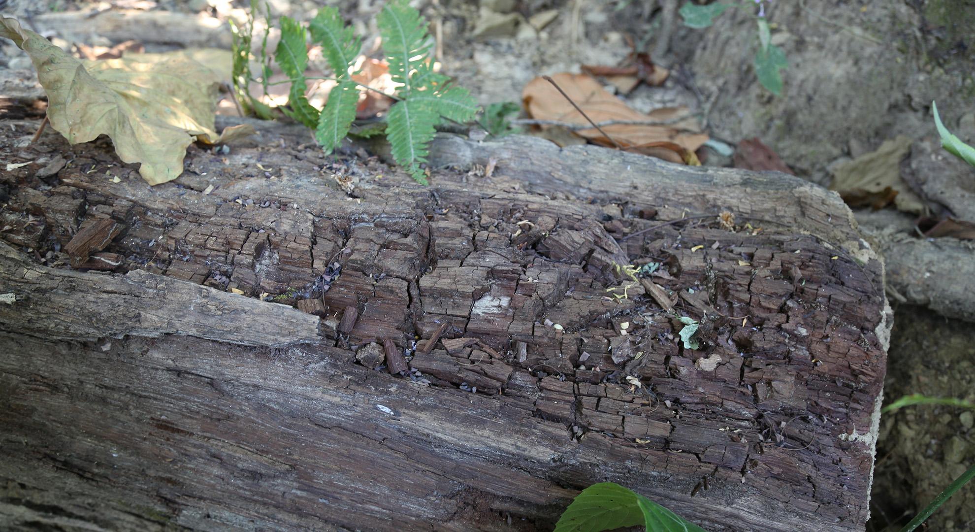 Plant Trails I